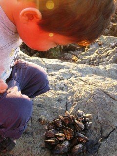 2 year Old Curiosity at the Tide Pool. Photo by Dave Oei.